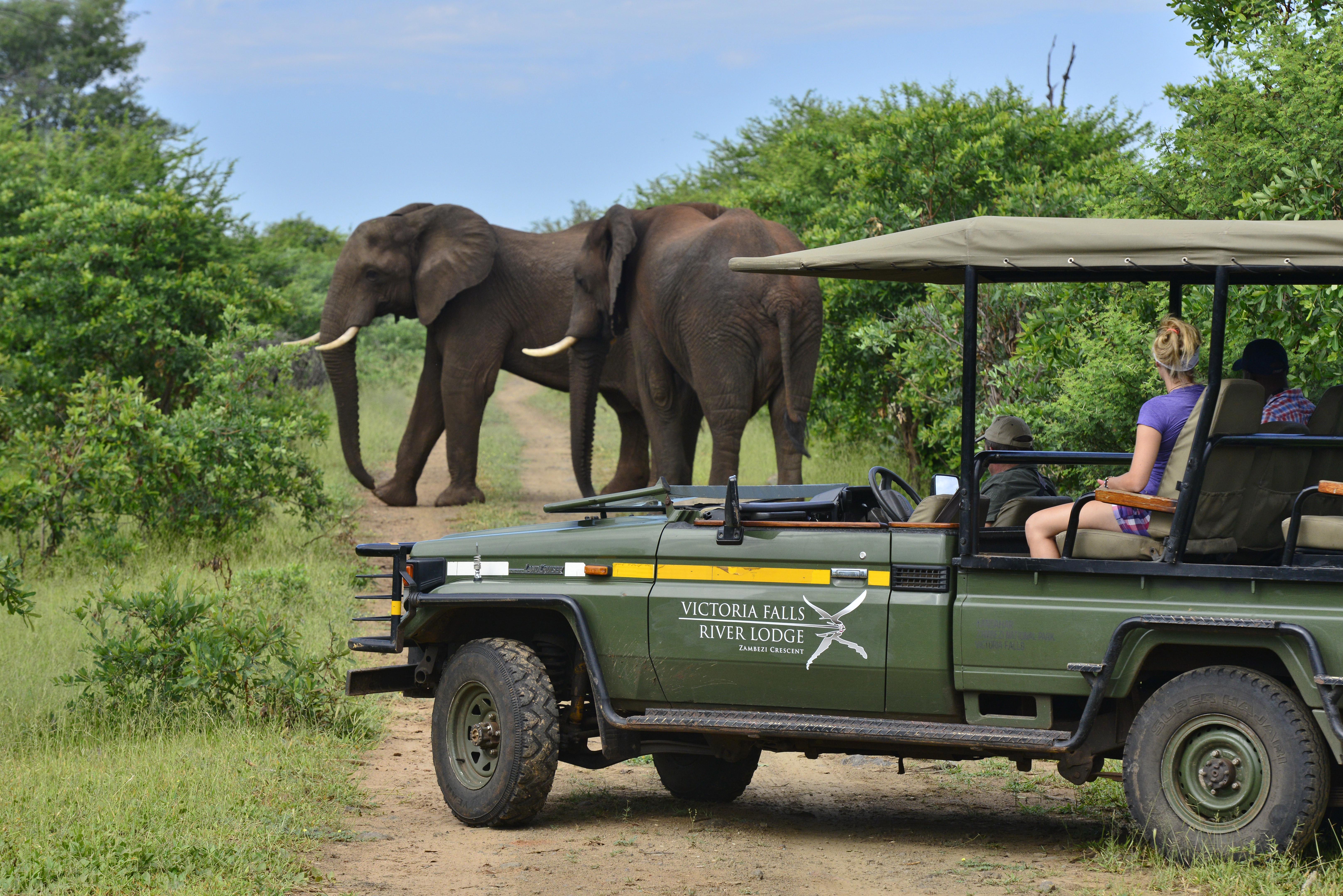 Safari der Victoria Falls River Lodge